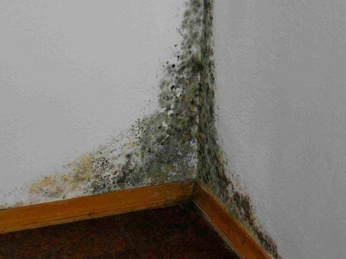 Плесень в углах дома. Плесень на стенах и в углах панельного дома: что делать