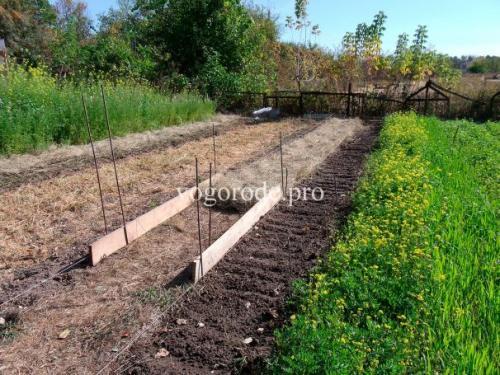Природное земледелие на садовом участке практика. Природное земледелие на практике.