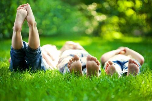 Газон перед домом дизайн. Красивый газон: фото идеи безупречного оформления газона своими руками